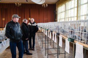 Oddziałowa wystawa gołębi pocztowych 2017
